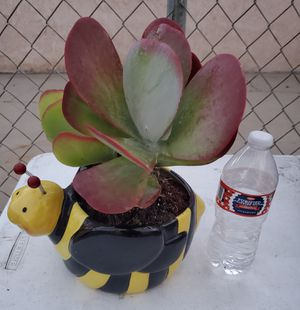 BIG BUMBLE BEE POT/ PLANT for Sale in Los Angeles, CA