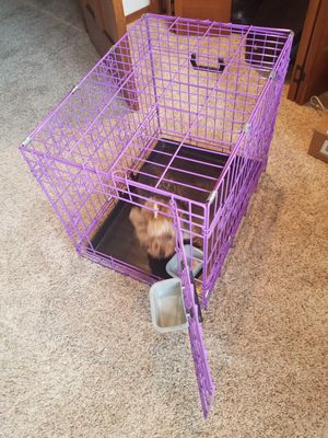 purple dog crate for Sale in Snohomish, WA