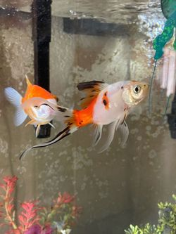 Fish And Fish Tank for Sale in Phoenix,  AZ