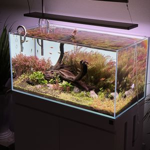 UNS Low-Iron Rimless Aquarium for Sale in Ontario, CA