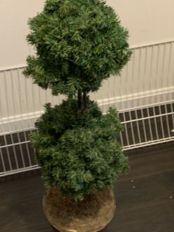 Topiary tree for Sale in Leominster,  MA