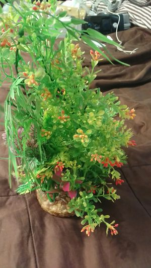 Plants for fish tank for Sale in Orlando, FL