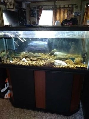 55 gallon aquarium with tons of extras for Sale in Athens, PA