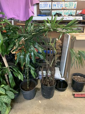 House plants for Sale in Columbus, OH