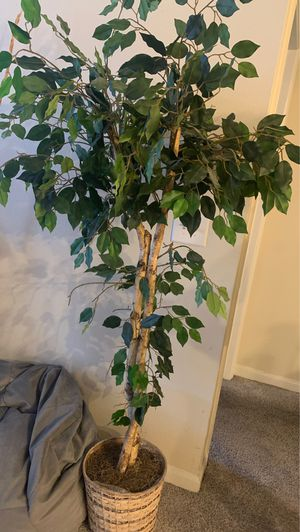 Fake decorative plant ! Awesome for indoor or out for Sale in Herndon, VA