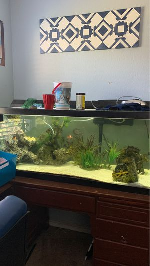 75 Gallon Fish Tank With Fish / Eel for Sale in Riverside, CA