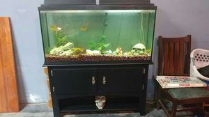 75 gal breeder tank with stand for Sale in Grottoes, VA