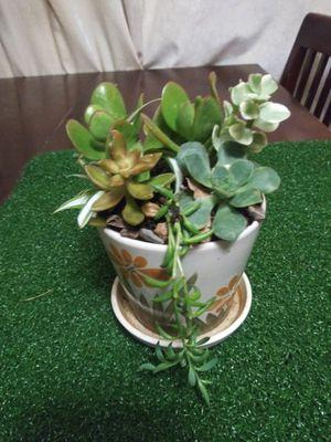 Succulents en macetita de cerámica pequeña for Sale in South Gate, CA