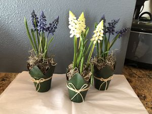Pottery Barn hyacinth flower pots for Sale in Greenwood Village, CO