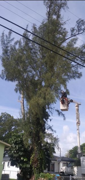 Pine for Sale in Miami, FL