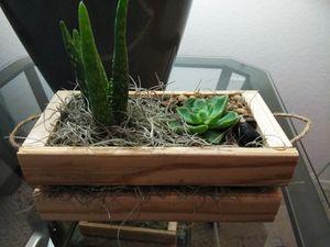 Succulent Arrangement for Sale in Orlando, FL