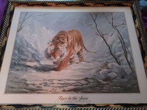 Tiger pictures for Sale in Selinsgrove, PA