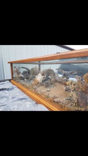 Taxidermy Table for Sale in Tolleson, AZ