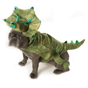 Tricerotops Dog pet costume for Sale in Fontana, CA