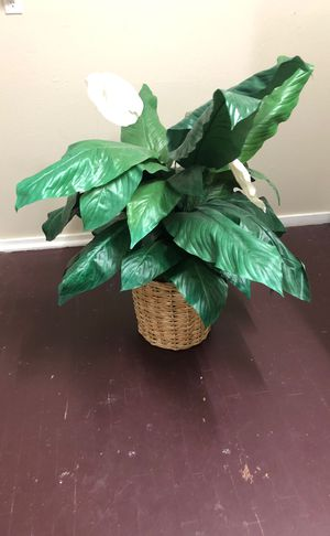 Fake plant for Sale in Palm Harbor, FL