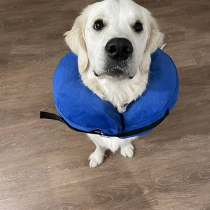 Inflatable Collar For Dogs and Cats for Sale in Redwood City, CA