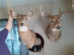 Deer heads for Sale in Columbus, OH