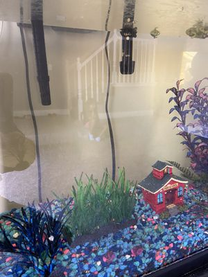 40 gal fish tank with cichlids for Sale in Sandy, UT