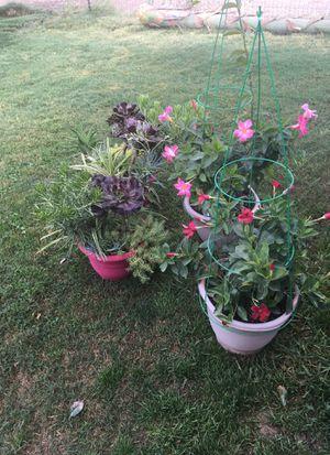 4 plastic pots with reals plants for Sale in Escalon, CA