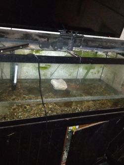 75 Gallon Fish Tank for Sale in Lebanon,  IN