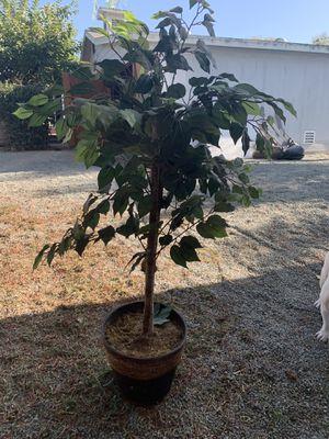 Fake Tree / Plant for Sale in Chula Vista, CA