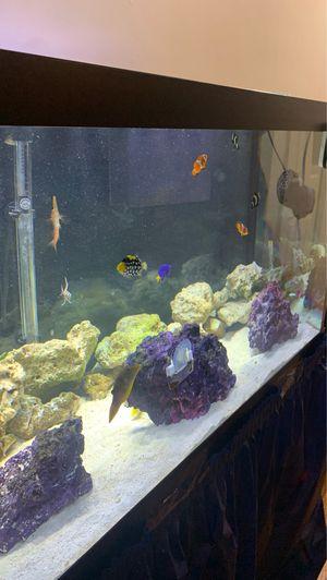 Fish tank for Sale in Newark, NJ