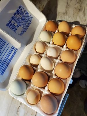 Fresh eggs for Sale in Odenton, MD