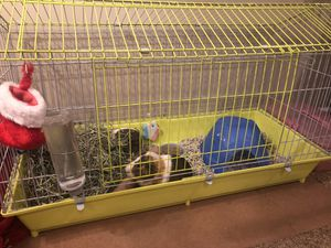 Guinea pig items for Sale in Etna, OH