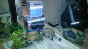 Fish tank filter, heater, and decor for Sale in Fresno, CA