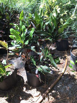Plants for Sale in Sanford, FL