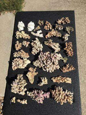Aquarium coral for Sale in Fort Worth, TX