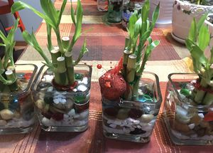 Lucky Bamboo 5 pcs means wealth gift for Christmas!! And 7 pcs Bamboo means health!! Good luck! for Sale in Tacoma, WA