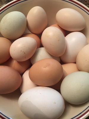fertile chicken eggs 12 for $10 for Sale in Farmington, CT