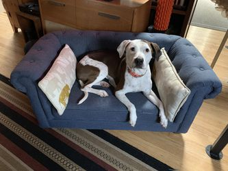 Dog couch for Sale in Newtown Square,  PA