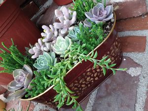 "10"" Long metal pot with succulent plants for Sale in Whittier, CA"