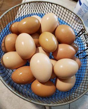 Huevos for Sale in Houston, TX