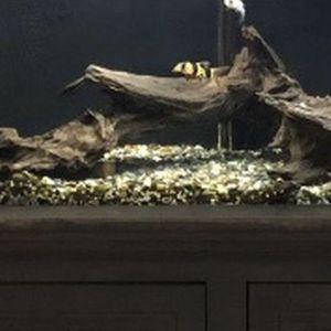 55g fish tank aquarium for Sale in Anaheim, CA