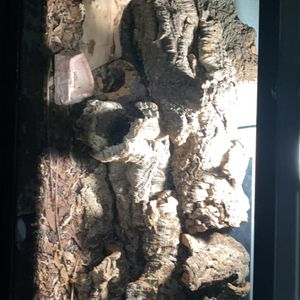 Reptile Tank for Sale in City of Industry, CA