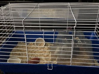 Guinea Pig Cage for Sale in Arvin,  CA