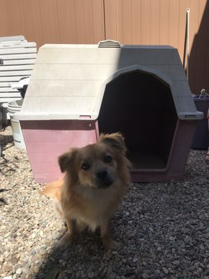Big dog house for Sale in Irvine, CA