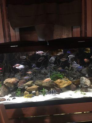 55 gallon oceanic for Sale in Lake Charles, LA