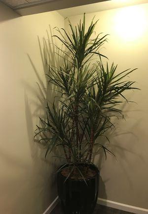 Artificial plant for Sale in Acworth, GA