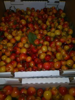 Fresh Rainier Cherries 18 lbs for Sale in Stockton, CA