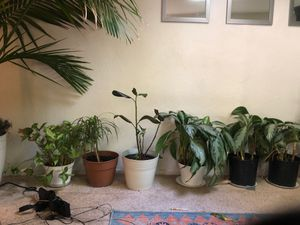 House full of plants for Sale in Scotts Valley, CA
