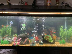 75 Gallon Fish Tank Aquarium with live fishes + Accessories for Sale in Worcester, MA