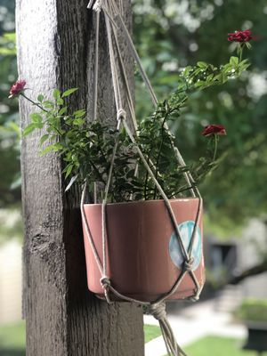 Plant hanger for Sale in Houston, TX