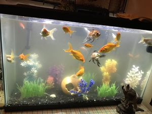 Fish tank and and fish for Sale in West Valley City, UT