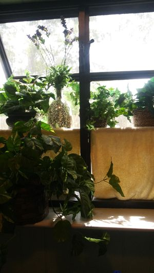 5 fake plants (decor) for Sale in Houston, TX