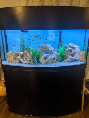 Holey rock for aquarium for Sale in Houston, TX
