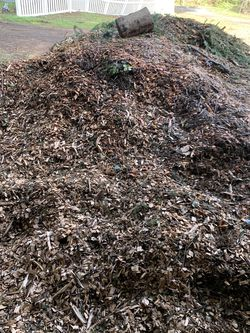 Free pine Wood Chips for Sale in Woodinville,  WA